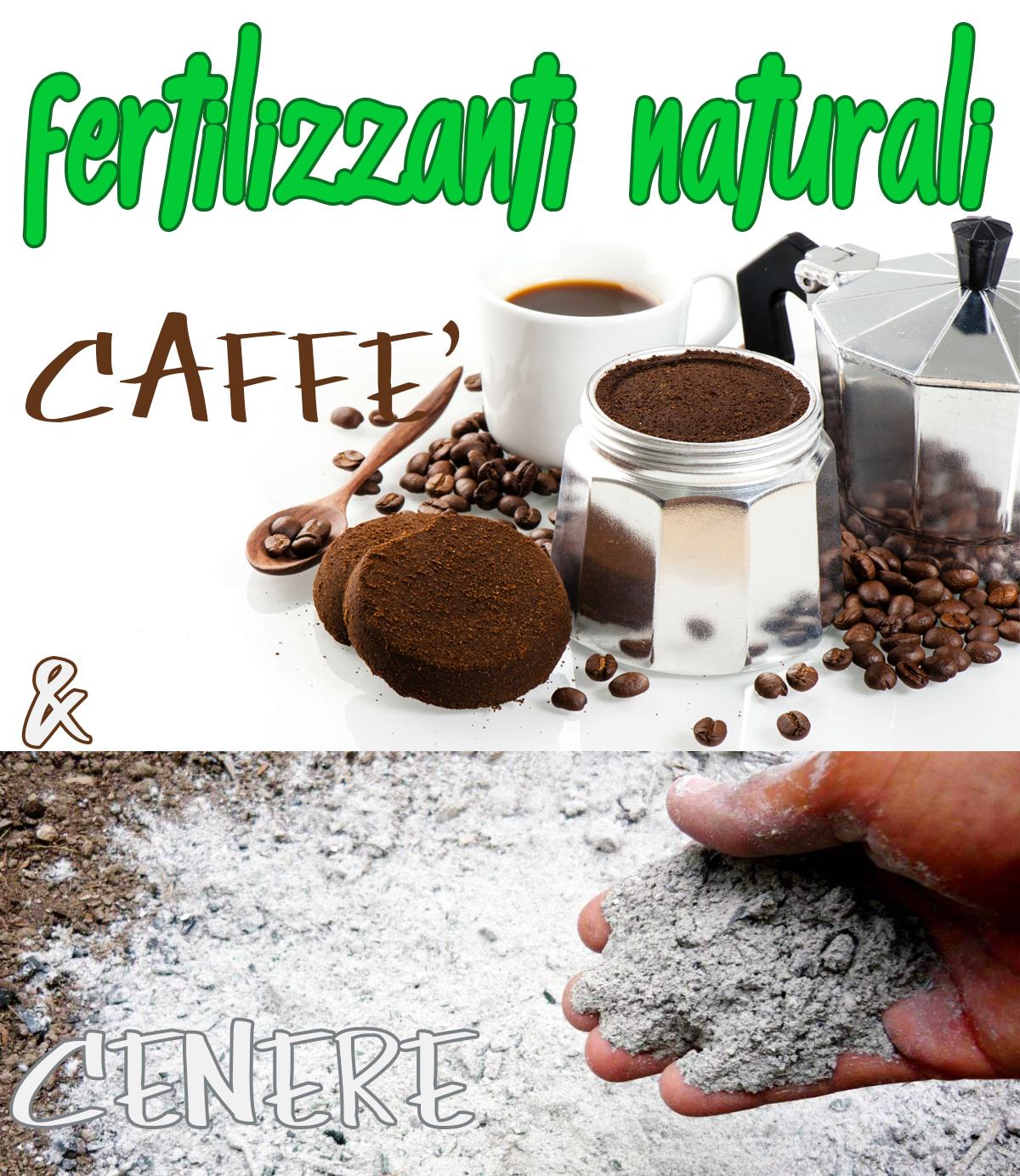 Proprietà Cenere Di Legna cenere e fondi di caffe'